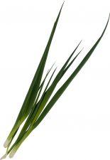 Лук зеленый свежий 50г
